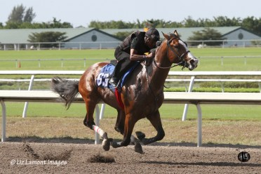 2011 Fasig Tipton, Florida Under Tack Show, Palm Meadows